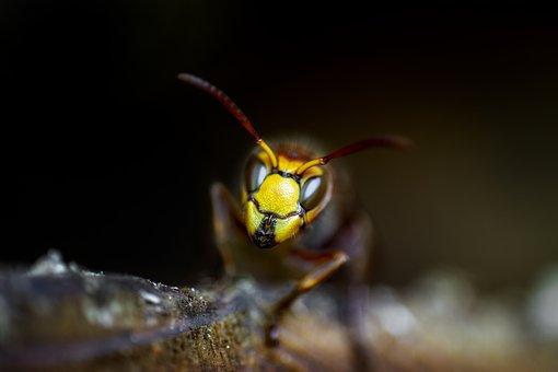 wasps 3833158 340