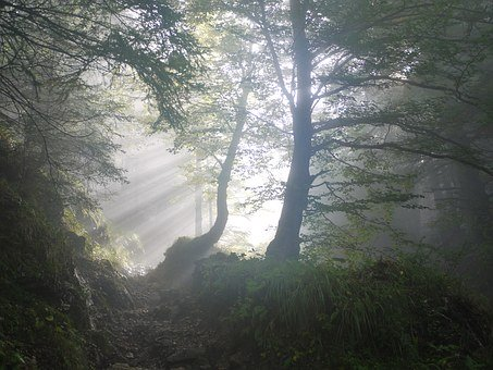 Morning, Fog, Sunbeam, Mystical, Mood