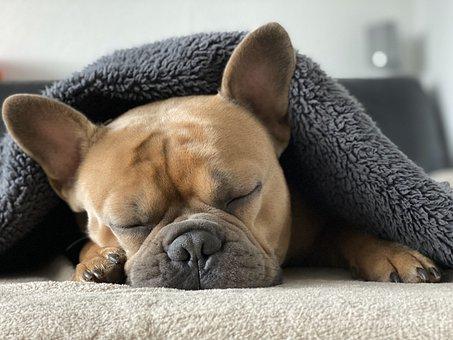 french bulldog 4713013 340