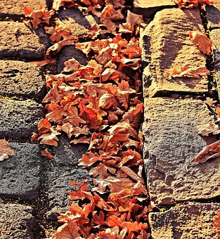 Autumn, Leaves, Golden Autumn
