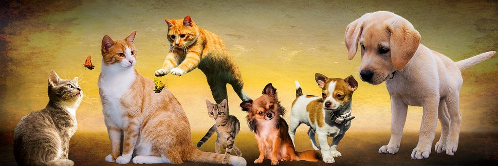 Animals, Dogs, Cat, Play, Young Animals