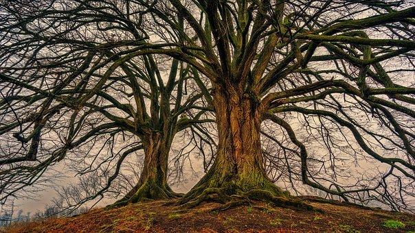 tree 3097419 340