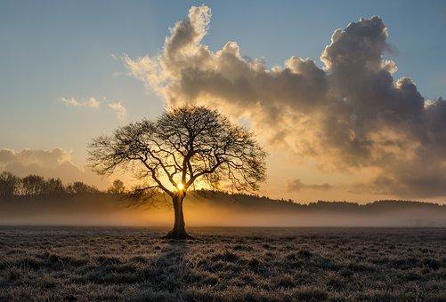 lone tree 1934897 340