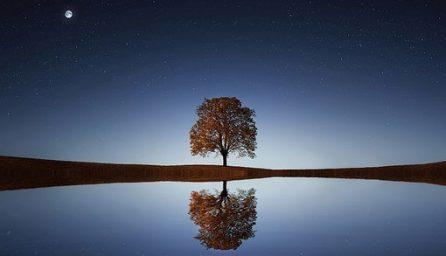 tree 838667 340