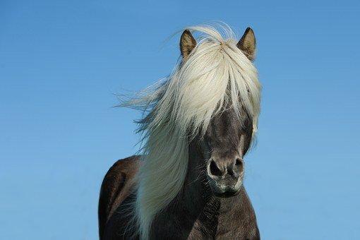 horse 1330690 340